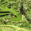 אינדונזיה - Indonesia