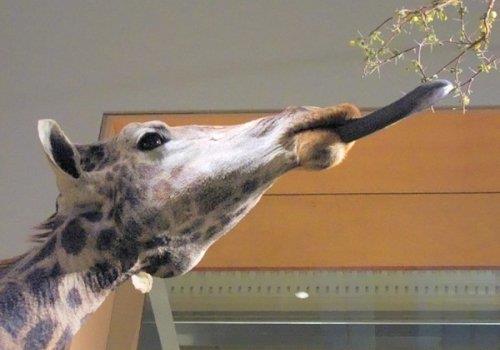המוזיאון הלאומי לתולדות הטבע, וושינגטון DC
