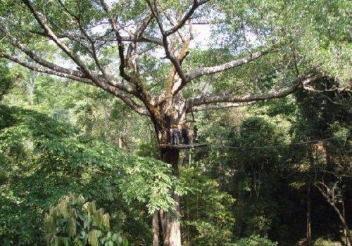 אטרקציית אומגות בג'ונגלים של צ'אנג מאי, תאילנד