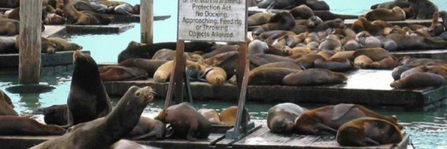פישרמנס וורף ורציף 39, סן פרנסיסקו (Fisherman's Wharf and Pier 39)