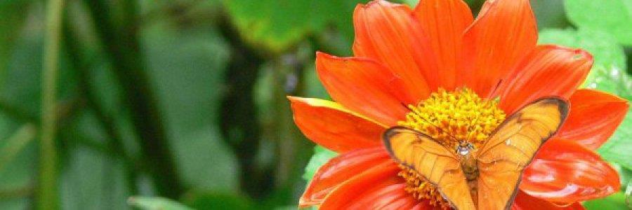 עולם הפרפרים והחרקים של פוקט, תאילנד